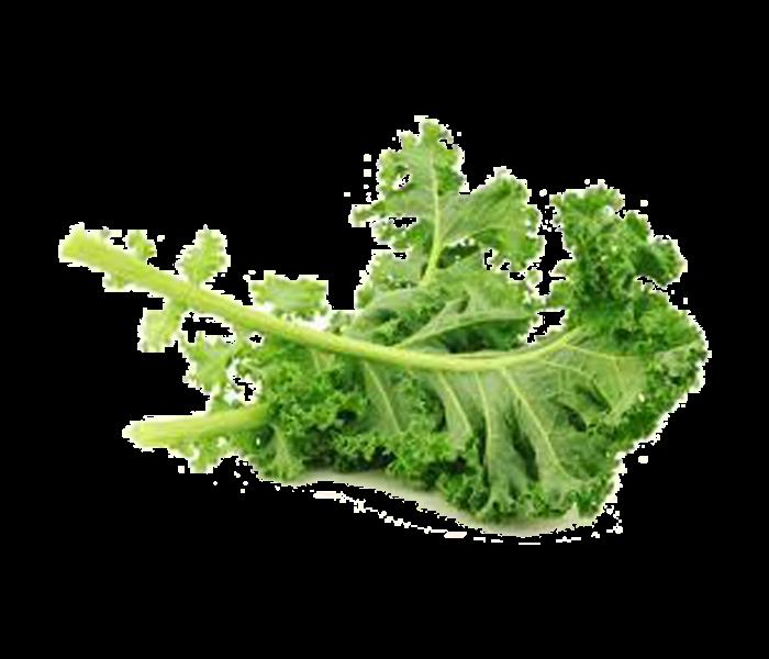 Kimu Farm Curly Kale Organik