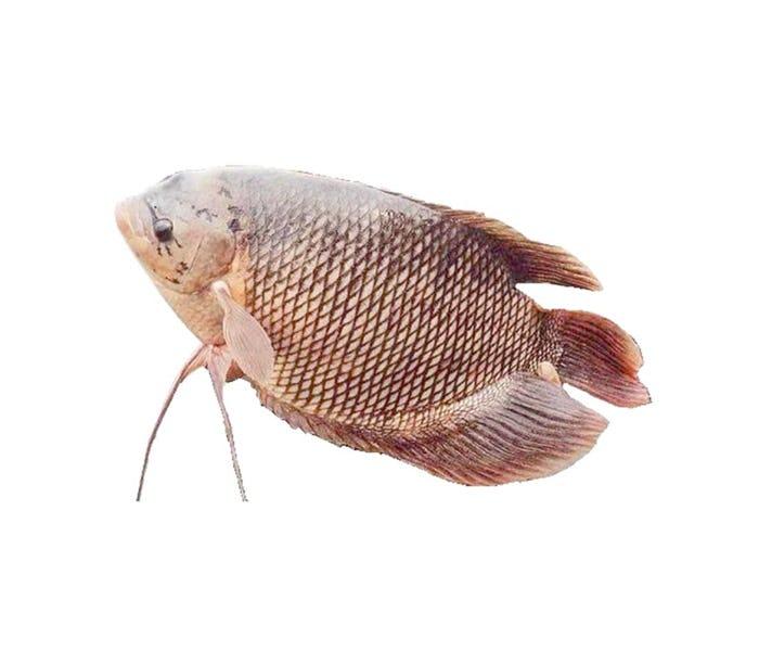 Keranjang Sayur Ikan Gurame