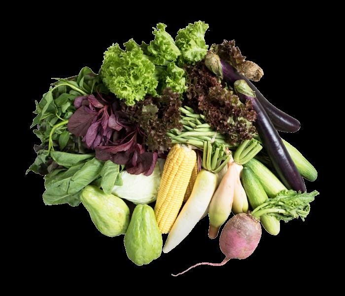 Sayurbox A Surprise Veggie Box